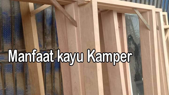 manfaat kayu kamper