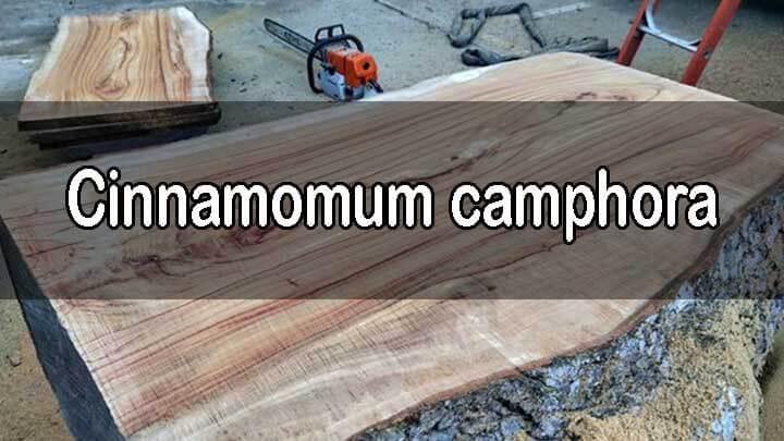 kelebihan dan kekurangan kayu kamper